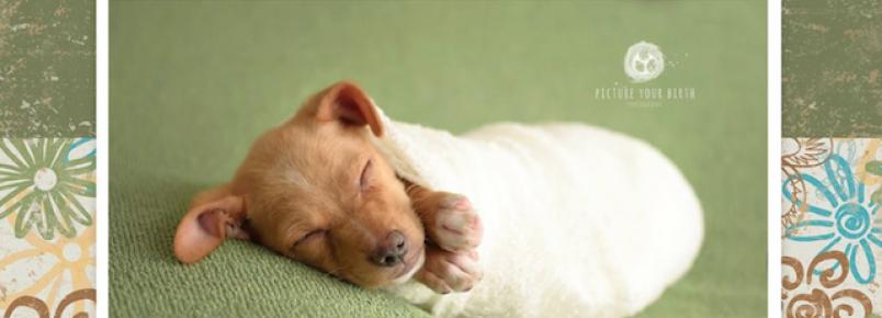 Cachorrinho adotado ganha ensaio fotográfico típico de bebês recém-nascidos