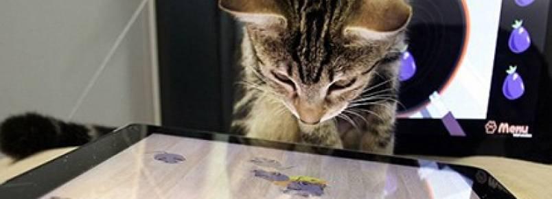 Vídeo: pets que não fazem ideia de como funciona a tecnologia