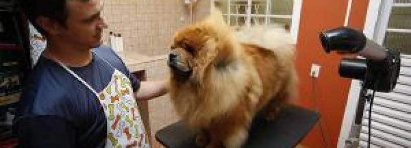 Lei que obriga pet shops a filmar serviços começa a valer no Paraná