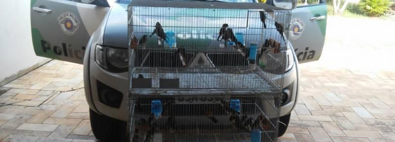 Policia Militar Ambiental apreende 42 pássaros da fauna silvestre