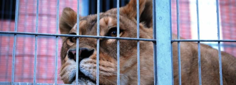 Catalunha está a um passo de proibir circos com animais