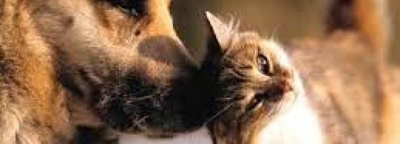 Prefeitura de Penha promove 1ª Feira de Adoção de cães e gatos