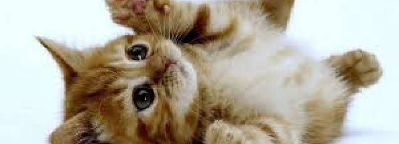 Conheça as principais doenças felinas e suas consequências