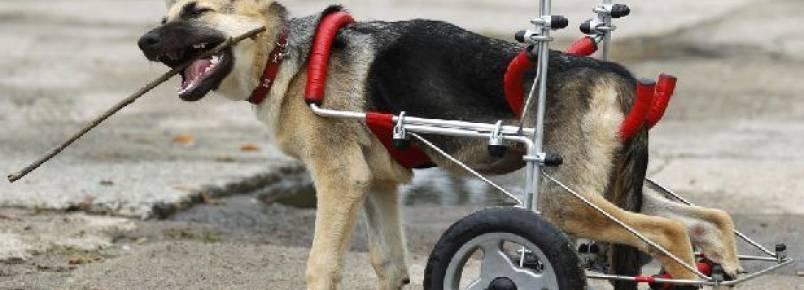 Você faz questão de um cão de raça? Pense duas vezes…