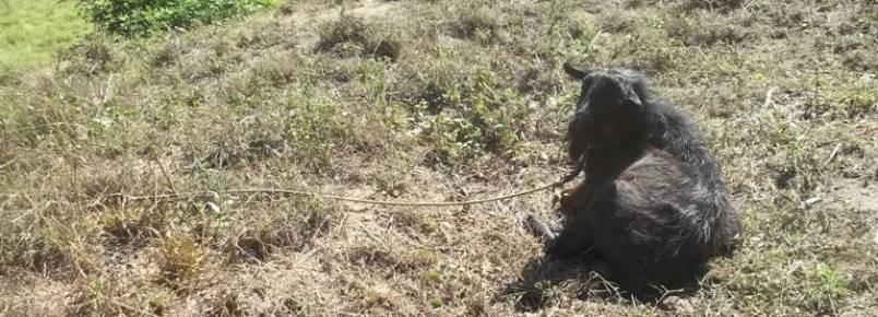 DENÚNCIA: Crime de Maus Tratos na Rodovia que liga Itabira à Santa Maria
