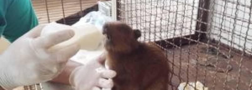 CCZ realiza atendimento de animais silvestres em situação de risco