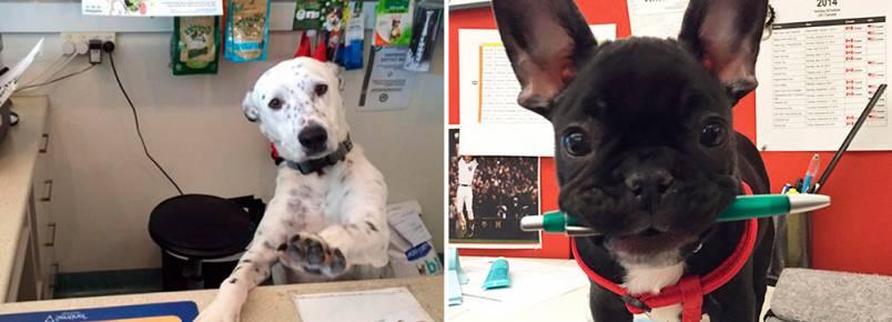 É isso que acontece quando você leva seu cachorro ao trabalho