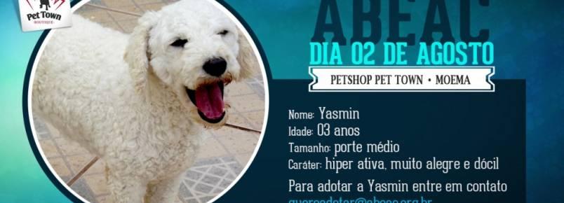 ABEAC realiza feira de adoção de cães em Moema (SP)