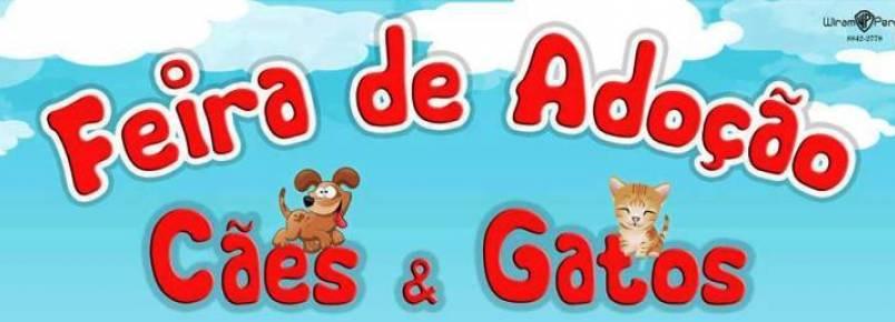 ONG realiza feira de adoção de animais em Muriaé (MG)