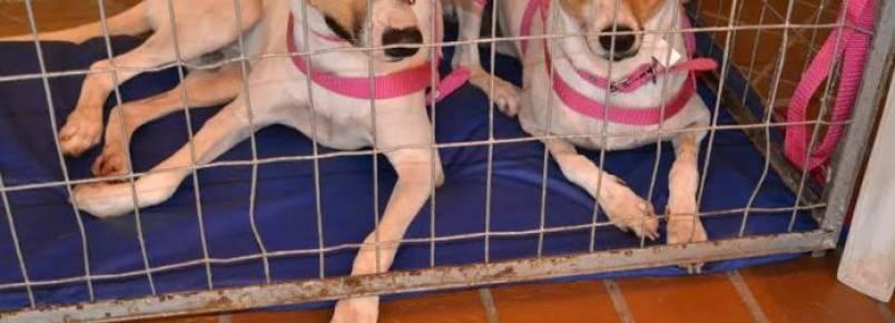 Pet Global traz programação com vacinas, adestramento e adoção de animais
