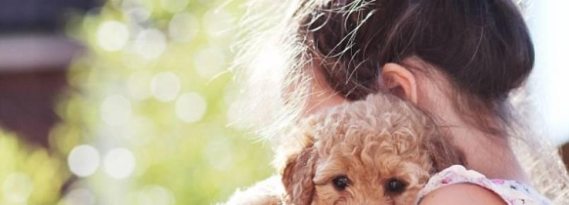 Estudo revela que animais de estimação deixam as pessoas menos estressadas