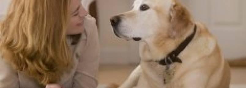Estudo revela que os cães entendem quando falamos com eles