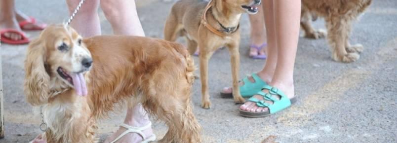 Tutor de animal de estimação deve ficar atento a produtos de limpeza