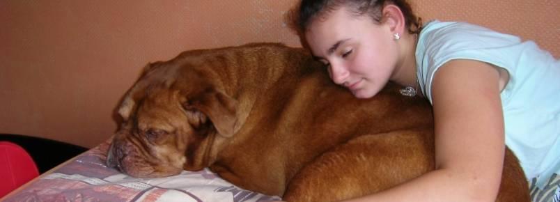 Cachorra que foi resgatada enterrada na França é adotada