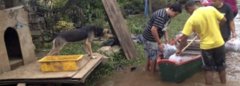 Mais de duas toneladas de ração foram distribuídas aos animais desalojados em POA