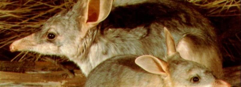 Além dos cangurus: 10 animais que você encontra na Austrália