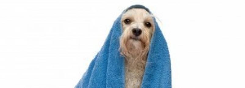 Banho e tosa de animais devem ser monitorados por câmeras