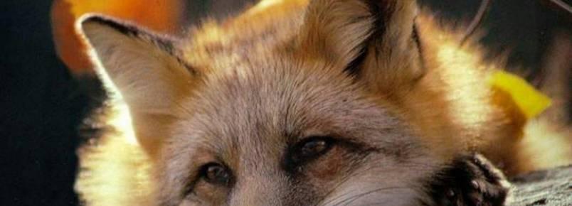 Deputados votam projeto que proíbe criação de animais extração de pele