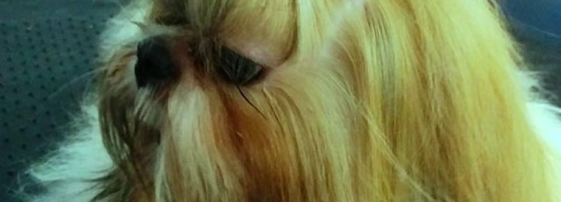 Lacka teve seu pelos hidratados com óleo de argan na Clinvet