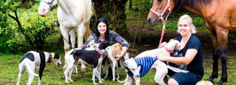 Lares temporários salvam animais