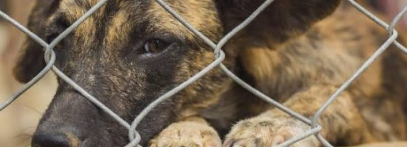 Abrigo é aberto para quem quise aodtar cães