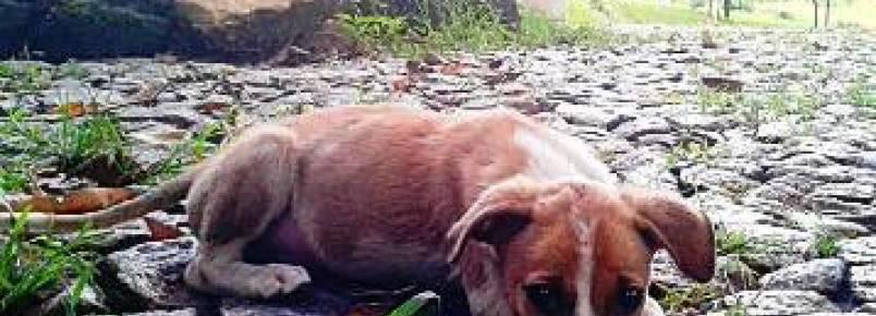Cães abandonados fazem parte da realidade de Itaúna