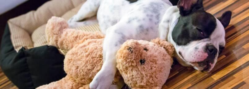 Cães sedentários: um problema atual