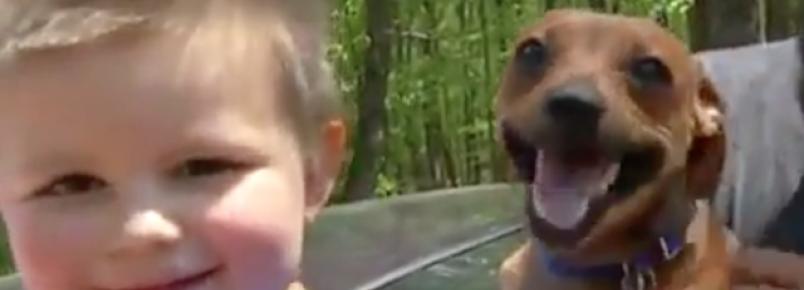 Cachorro ajuda família a encontrar garoto de 3 anos que estava perdido