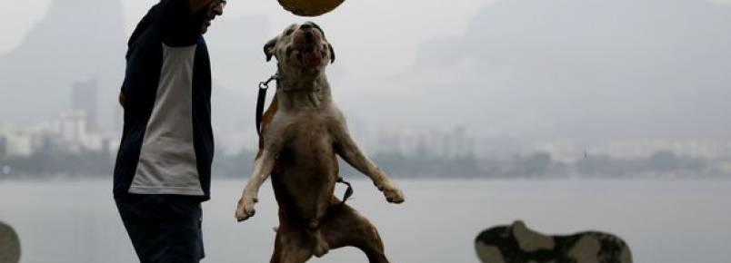 Cem cachorros buscam um lar em evento na Lagoa