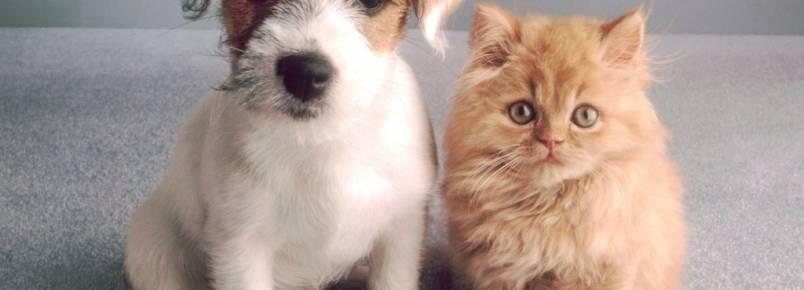 Mudança de casa: como adaptar cães e gatos ao novo lar