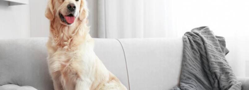 Como limpar os pelos de cachorro da casa