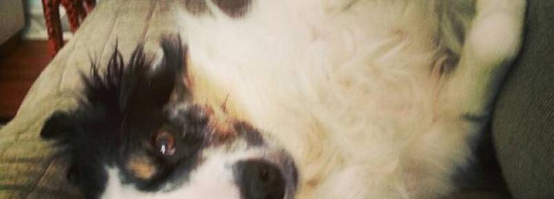 Cachorra arrisca a própria vida para seu tutor durante incêndio