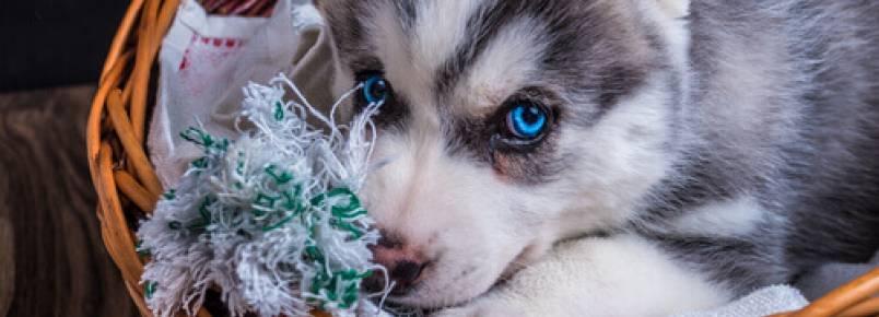 5 dicas spara limpar a cama dos cães