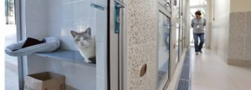 Centro de Controle de Zoonoses tem mais de 300 animais à espera de um dono