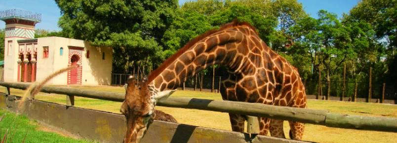 """Zoológico de Buenos Aires será fechado. """"Manter animais em cativeiro é degradante"""", dizem autoridades locais"""