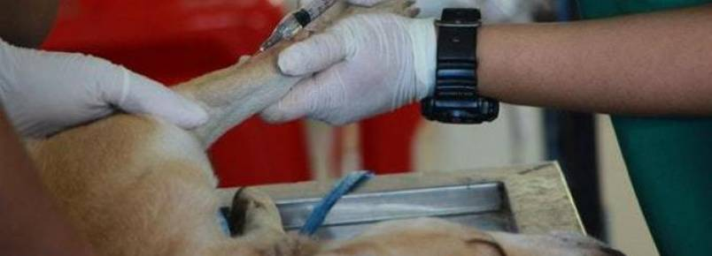 Estado de SP terá oito novas clínicas veterinárias públicas