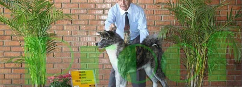 Milton Cheib apresenta mais uma cadela premiada