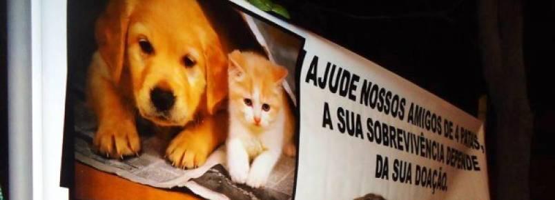 ONG de proteção aos animais de Caicó inicia campanha para construção da sede própria