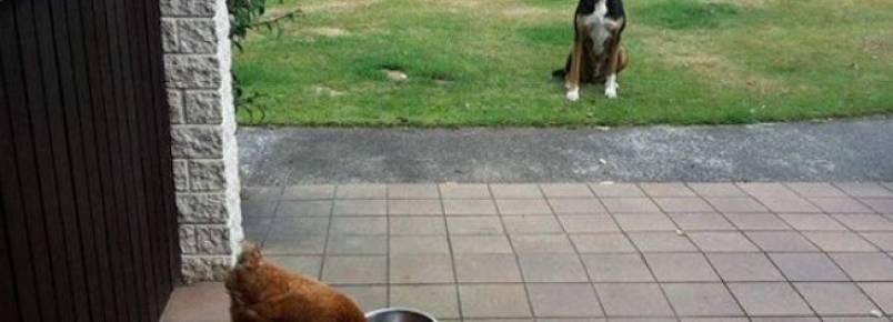 9 cachorros que estão tentando descobrir como funciona a vida