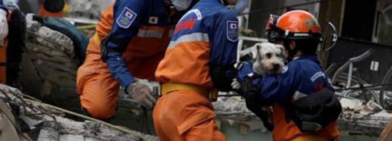 Cachorrinho é resgatado com vida seis dias depois de terremoto na Cidade do México