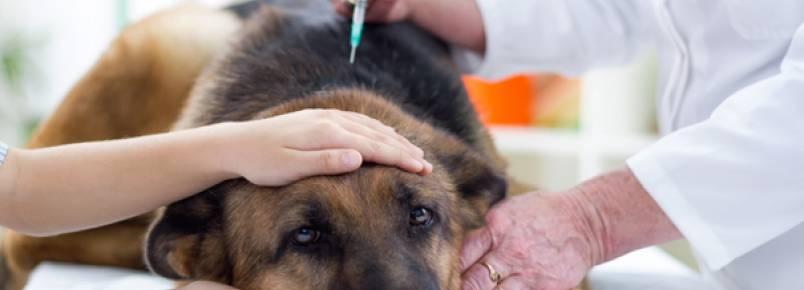 Comissão aprova veterinário gratuito para animais de pessoas carentes