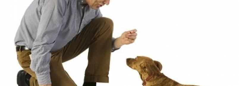 Como ensinar seu cão a fazer cocô no lugar certo?