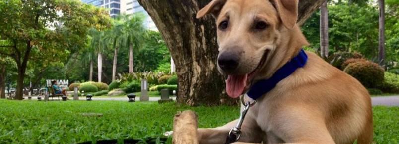 Turista alemã adota cãozinho durante férias nas Filipinas