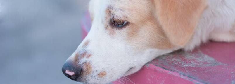 Madri não sacrificará os animais abandonados