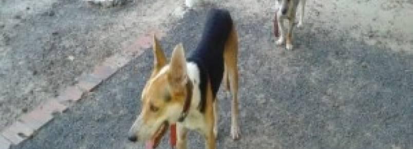 Promotor de Justiça vai apurar matança de cachorros promovida pela Prefeitura de Esperantina