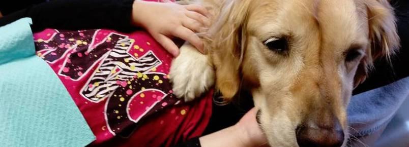 Cachorra trabalha como assistente de dentista para acalmar os pacientes