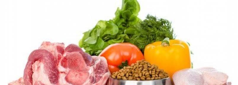 Alimentos orgânicos para animais de estimação