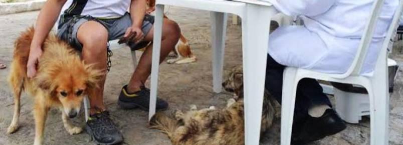 Dono de cão desaparecido reencontra animal em feira de adoção