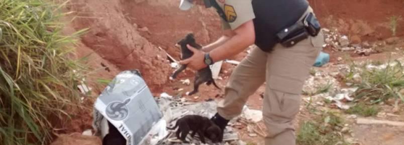 Policiais resgatam filhotes de cachorro abandonados
