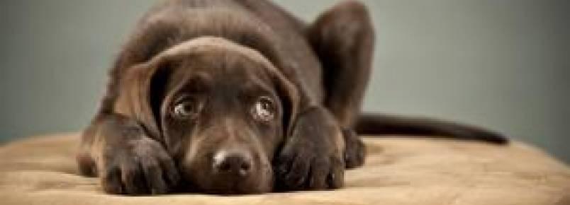Maneiras de deixar cães tímidos mais confiantes